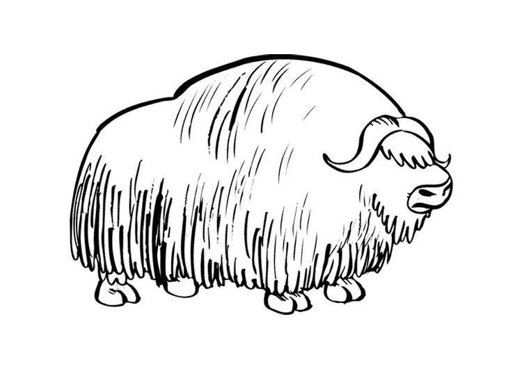 Dibujo para colorear Bisonte 01