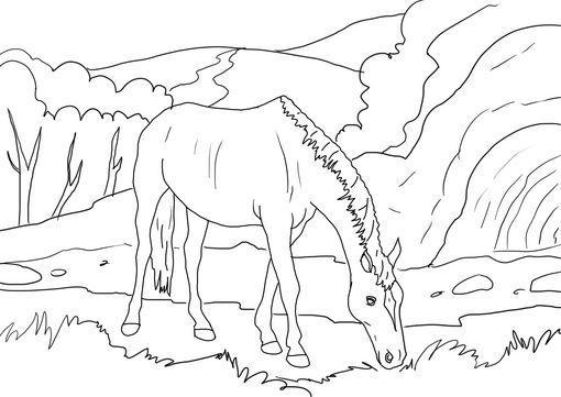 Dibujo para colorear Caballo 24