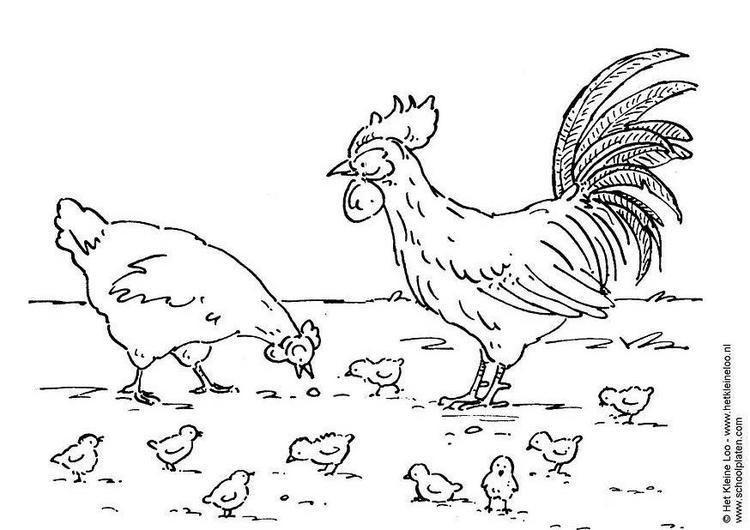 Dibujo para colorear Gallina y familia