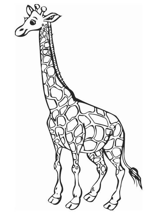 Dibujo para colorear Jirafa 05