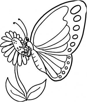 Dibujo Para Colorear Mariposa Posada En Flor