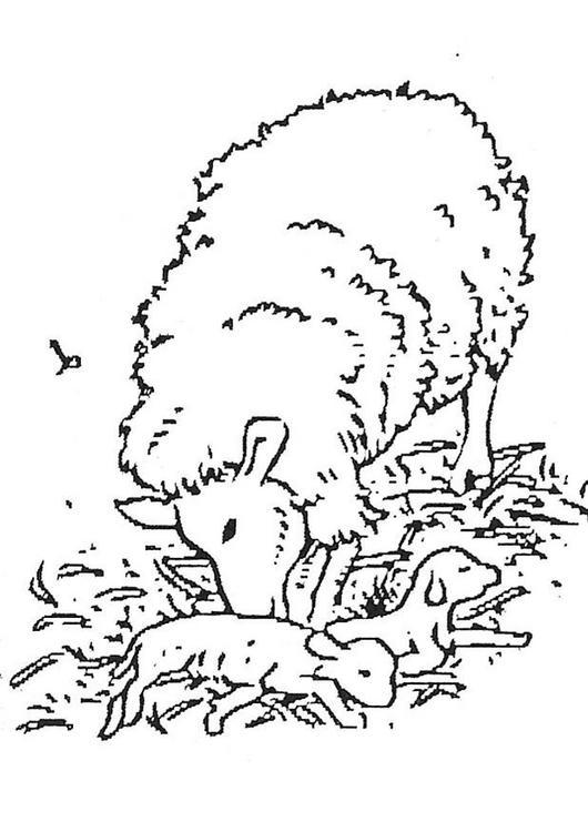Dibujo para colorear Oveja con cria
