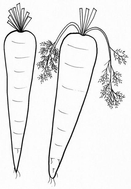 Dibujo Para Colorear Zanahorias 02